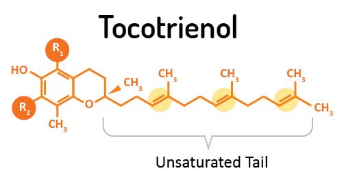 Tocotrienols-unsaturated vitamin E