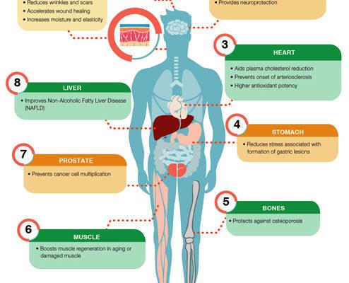 Human-Body-Final-toco-E-494-health-disease-management